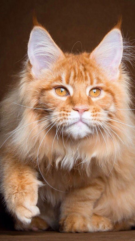 Hi i am LongFur the snowclan medcat i am a she-cat