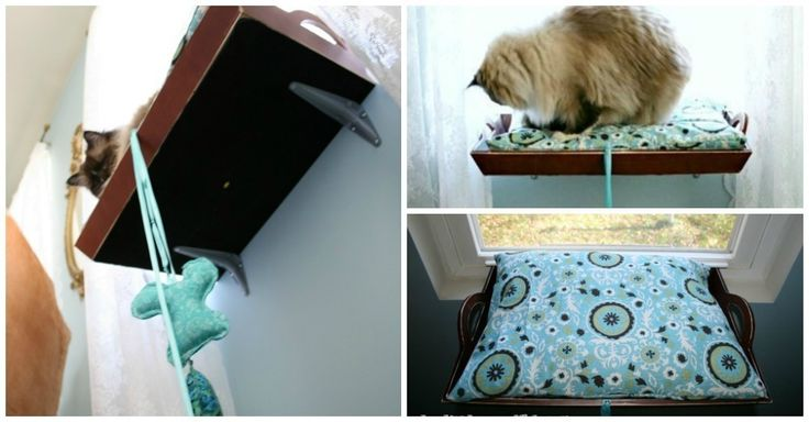 19 best images about cats just cats on pinterest cat for Homemade cat bed