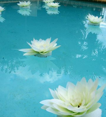 find this pin and more on wedding pool decorations - Pool Decor