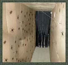 Bug Tunnel using cardboard walls~maybe paint cardboard flat black, and the bugs with glow in the dark paint?