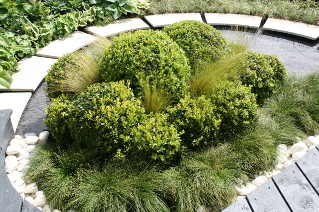 Structural impact by use of buxus interplanted with Stipa Tenuissima (pony tail grass)