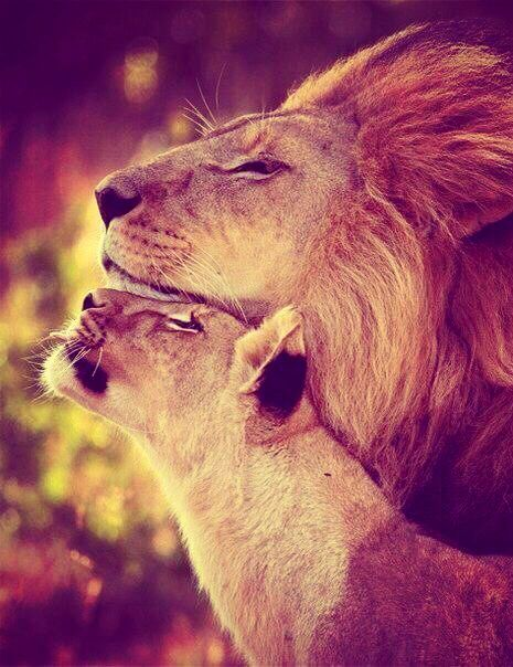 I'll be your lioness, if you be my king protector