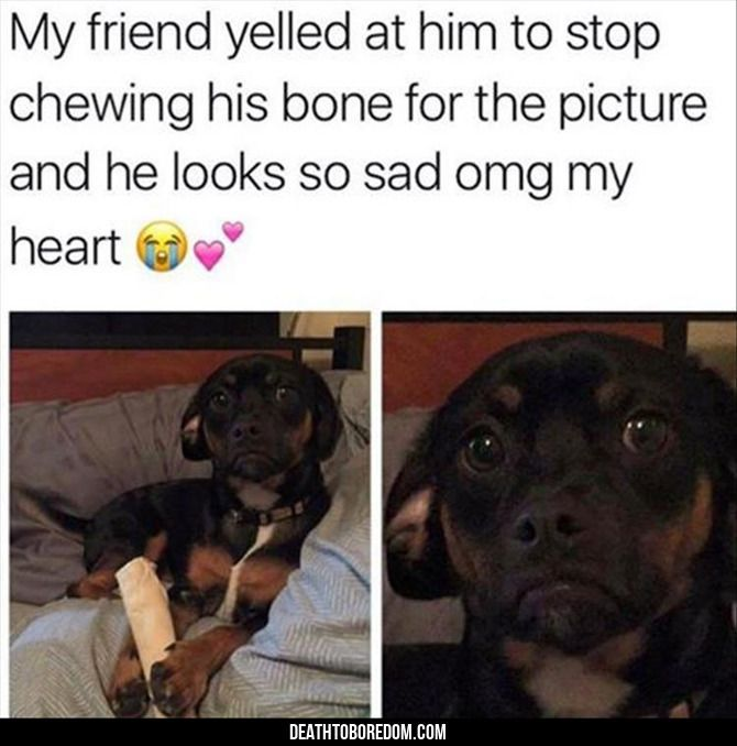 Funny Animal Pictures Of The Day - 22 Images