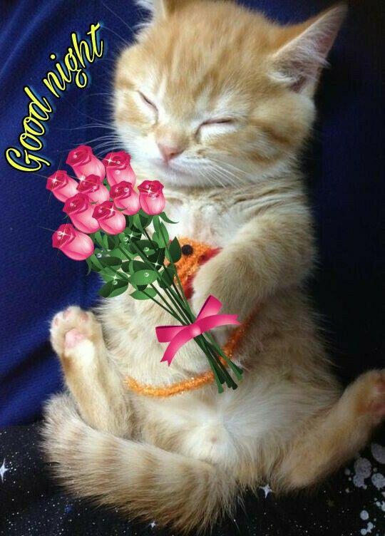 Sweet dreams my friend!!😊🍃💙🙏🌼💐🌹