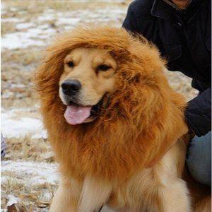 Leeuwenmanen voor honden Vanaf nu kan uw hond ook feestjes meevieren! In minder dan een minuut is uw hond omgetoverd in een angstaanjagende (en schattige) leeuw.  Beschrijving: Deze manen zijn gesc...