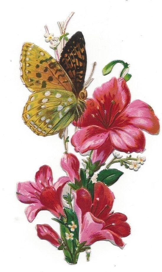 Victorian Die Cut Scrap Butterfly atop an Amaryllis