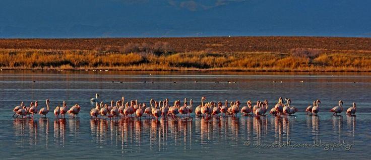 flamingos - null