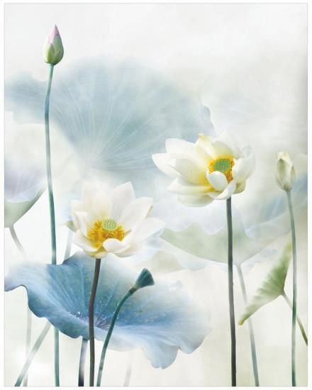 ✿ White flower ✿ The Feminine Beauty - pastel white flower lotus