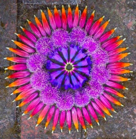 Kathy Klein // flower mandalas