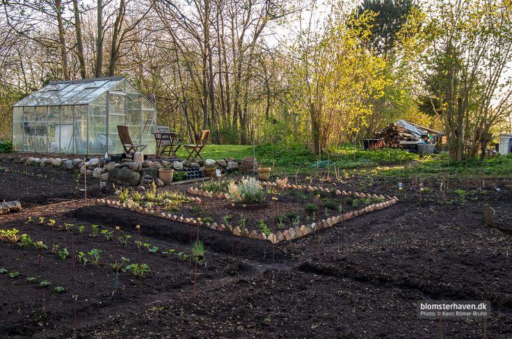 Køkkenhaven 2014 med nyt krydderurtebed og nye jordbærrækker