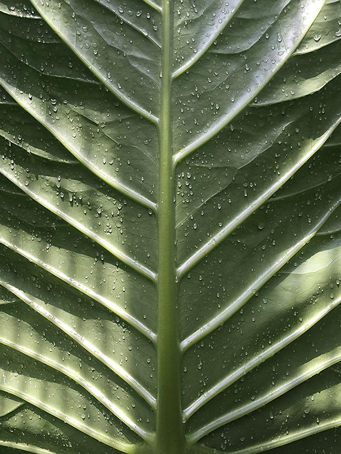Cute Blatt Botanischer Garten M nchen Foto G Denecke
