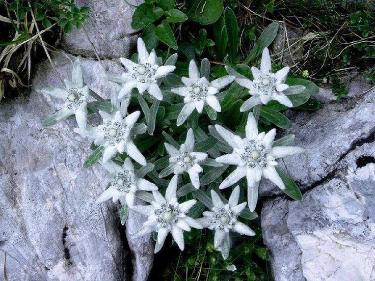 https://www.facebook.com/178880045643195 Gyönyörű virágok