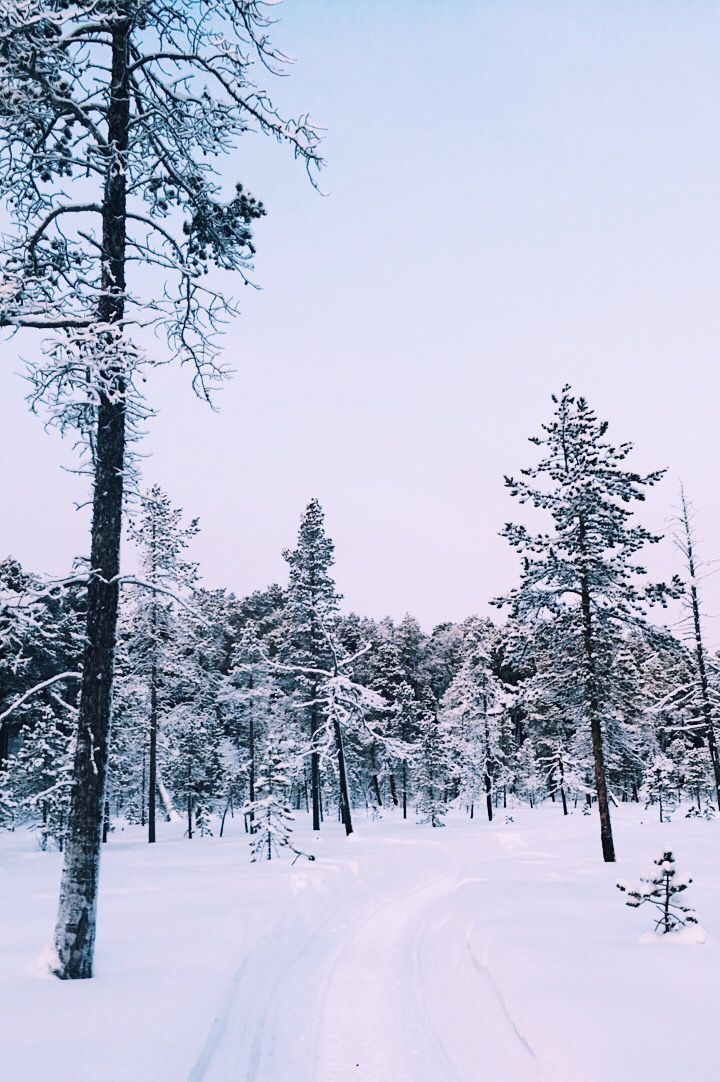 Lapland forest in winter. Is that Narnia?