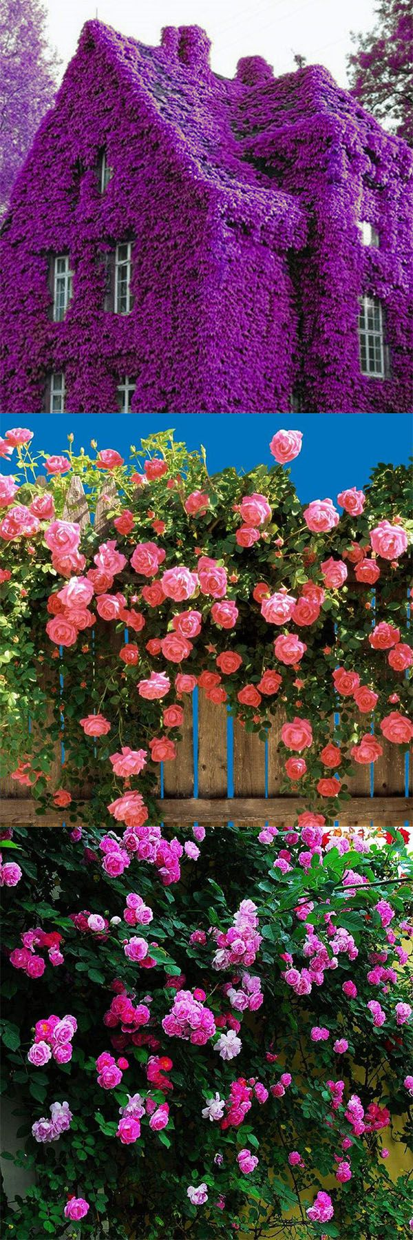 -How to decorate the garden in splendid flower seeds?Click the Visit or picture to get it:)