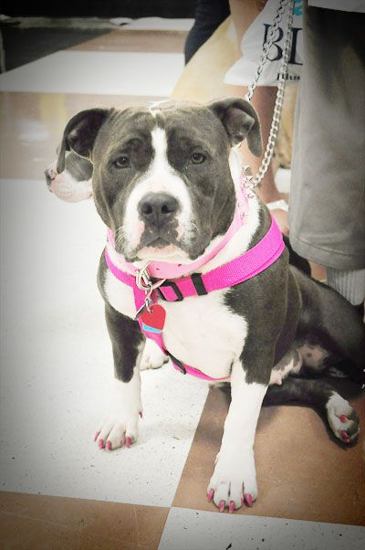 Researching Breed Specific Legislation (BSL) Before You Travel http://www.dogtipper.com/tip/2013/07/researching-breed-specific-legislation-bsl-before-you-travel.html