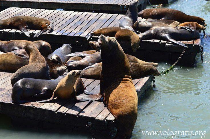 leoni marini pier 39
