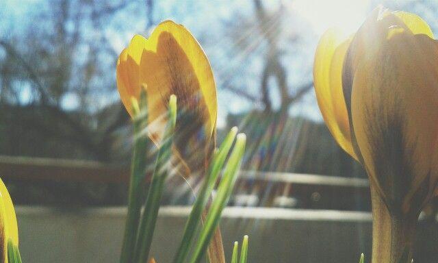 #sunny #flower #spring # breathe