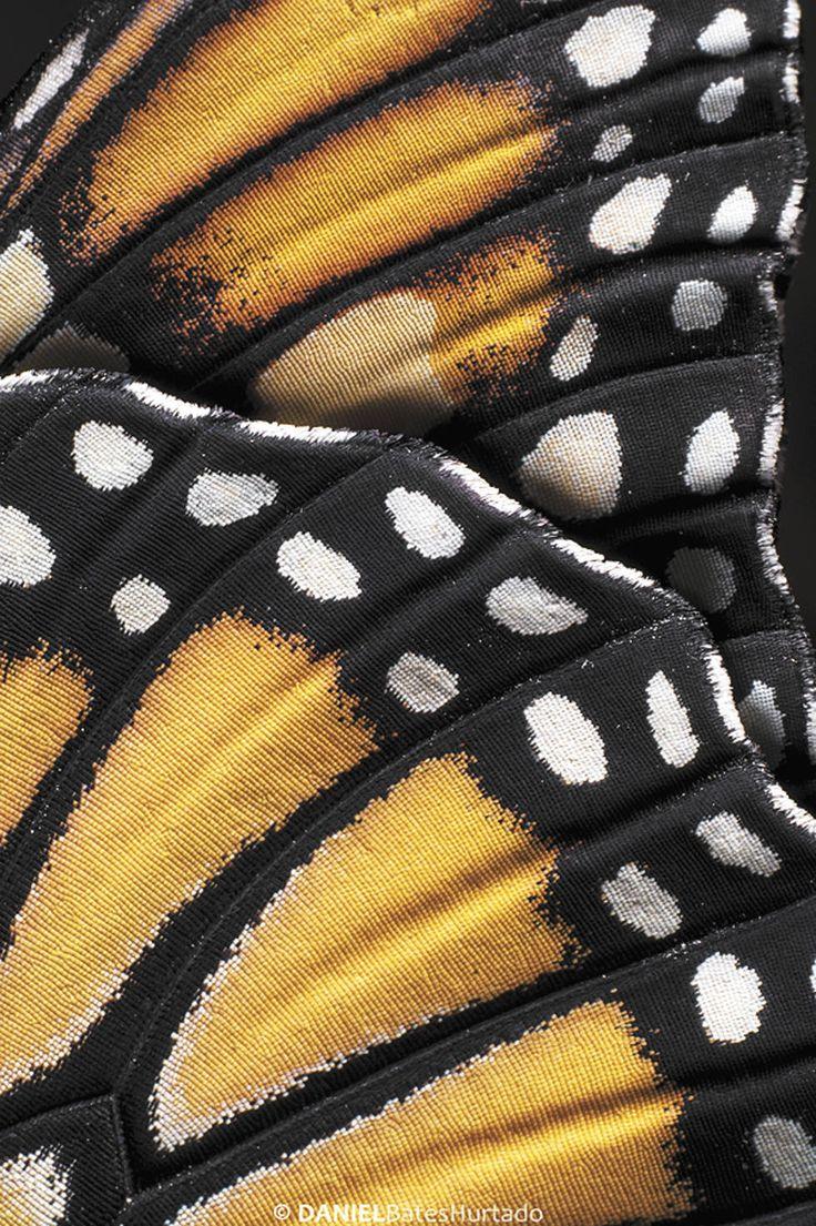 Mariposa Monarca. La perfección. En dos semanas, la oruga se convierte en mariposa dejando ver la obra de arte de la naturaleza en sus alas.Foto: Daniel Bates Hurtado/Vanguardia