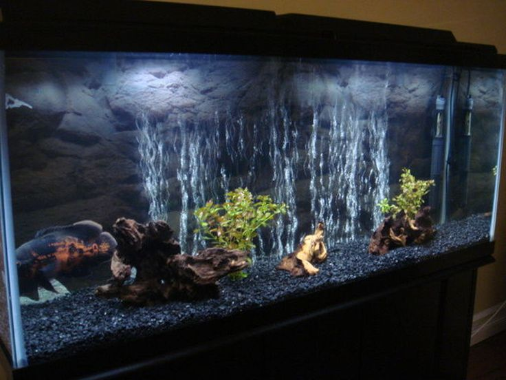 17 best images about oscar fish tanks on pinterest for 55 gallon aquarium decoration ideas