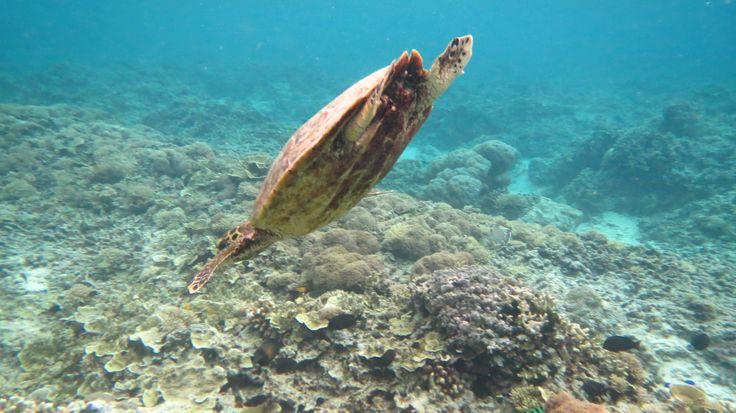 Turtle vor Gili Meno