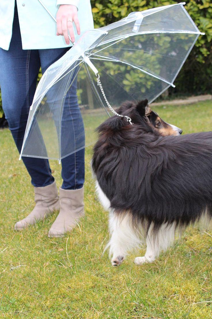 De Honden Paraplu houdt je geliefde huisdier droog, schoon en comfortabel in de regen en sneeuw! Bevestig de ketting van de paraplu eenvoudig aan de halsband van je hond en omdat de paraplu transparant is, houd je contact met je hond tijdens de wa...