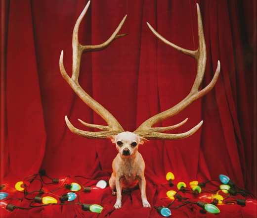Reindeer Max, The Grinch | Christmas Cool | Pinterest