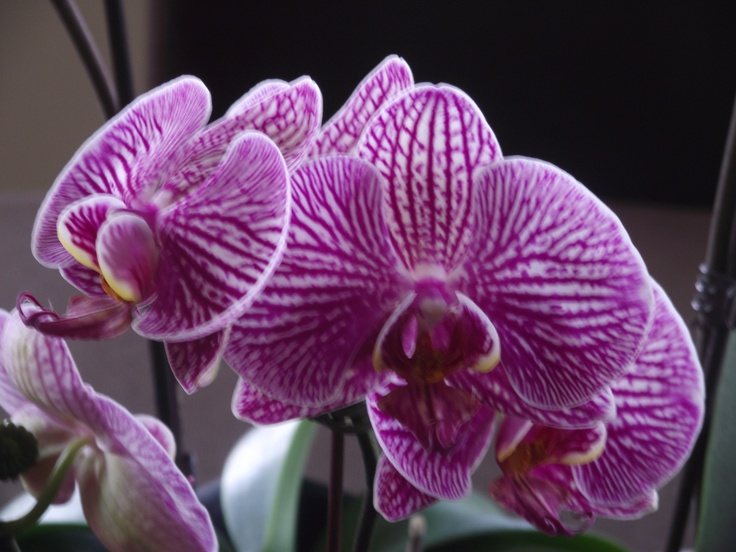Gift by Dave & Julie - No. 13 #orchids