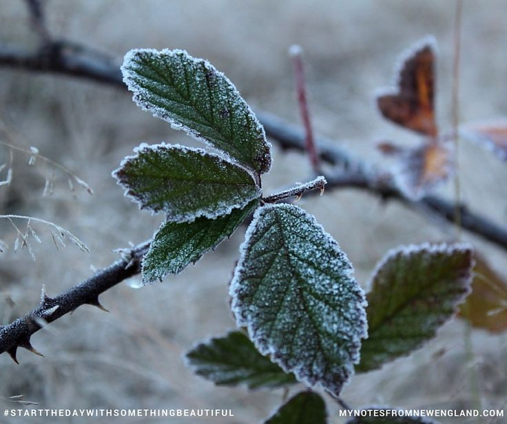 Big touch of frost this morning #startthedaywithsomethingbeautiful