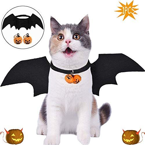 Halloween Disfraces, Bat Wings, Kawaii, Holiday, Party, Outfits, Costume Halloween, Costumes, Animals
