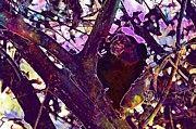 "New artwork for sale! - "" Marmoset Monkey Food Persimmon  by PixBreak Art "" - http://ift.tt/2v4r7S8"