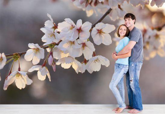 Fototapeten Kirschblütenzweig - japanische Blüten in zartem Rosé | wall-art.de