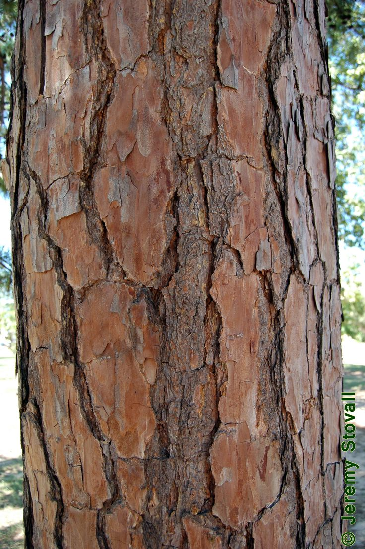 how to identify types of trees by bark