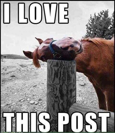 I Love You Quotes: Funny Horse Cuddles A Fence Post Saying I Love This Post
