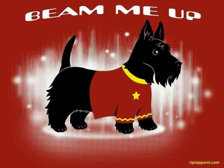 Beam me up Scottie - Star Trek Scottie. This so appeals to the nerd in me