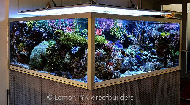Triton elements reef aquarium display tank