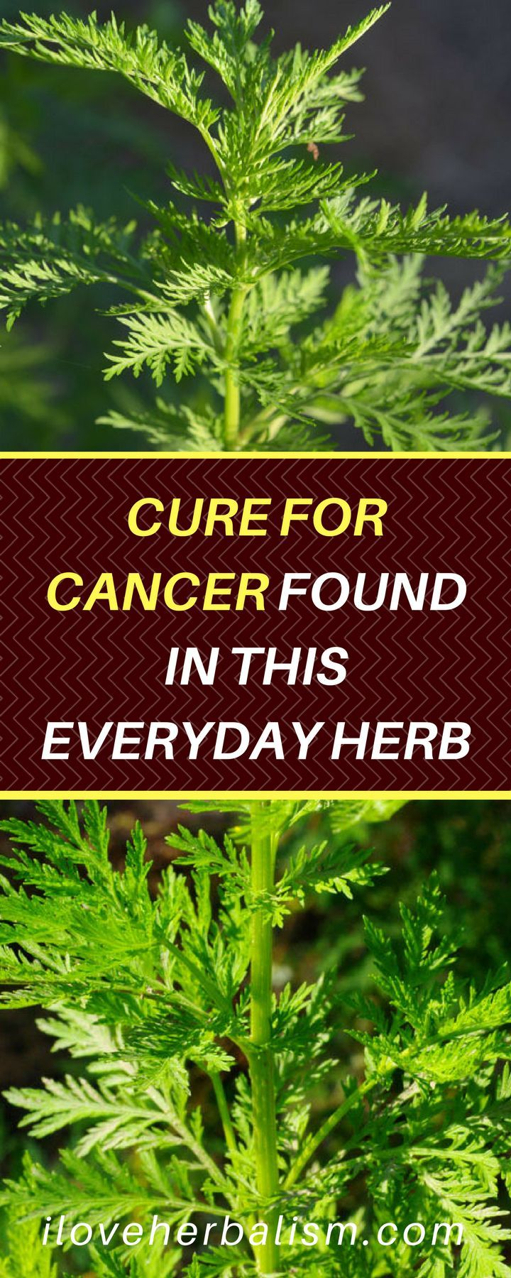 [VIDEO] AMAZING! CURE FOR CANCER FOUND IN THIS EVERYDAY HERB…. MUST WATCH!!!