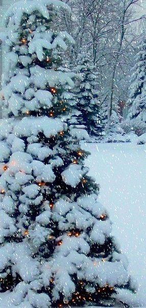 snow + christmas lights