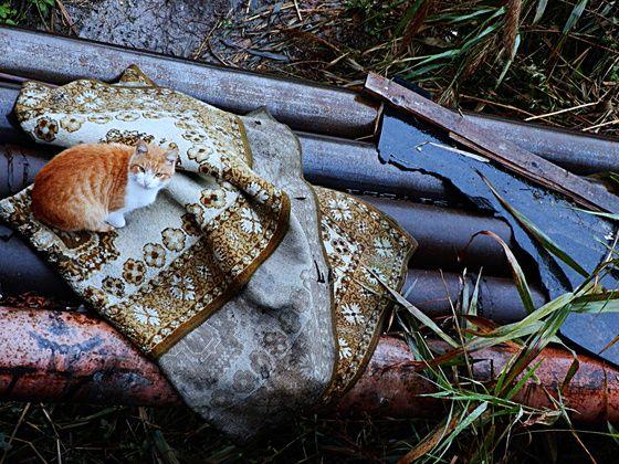 #cat #blanket #homeless A homeless cat waiting for a wonder.