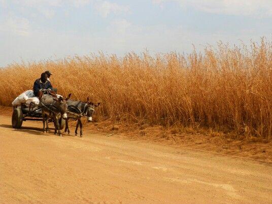 #donkeycar #country Belfast Mpumalanga South Africa.