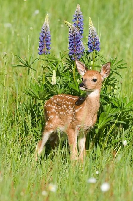 鹿こんにちは