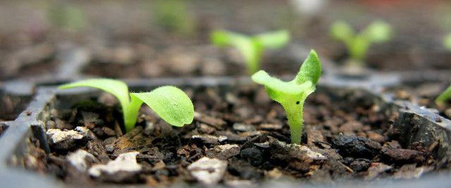 Semear, coletar, guardar e compartilhar sementes! Seja um catador de sementes.   ©Denise Lindorfer