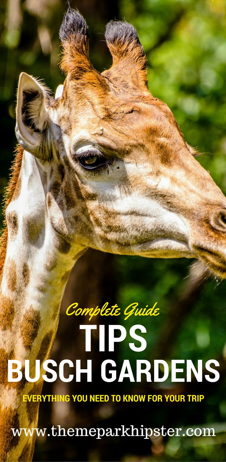 Busch Gardens Tampa Bay Tips, Tours, and more! How to make the most of your day at this theme park.