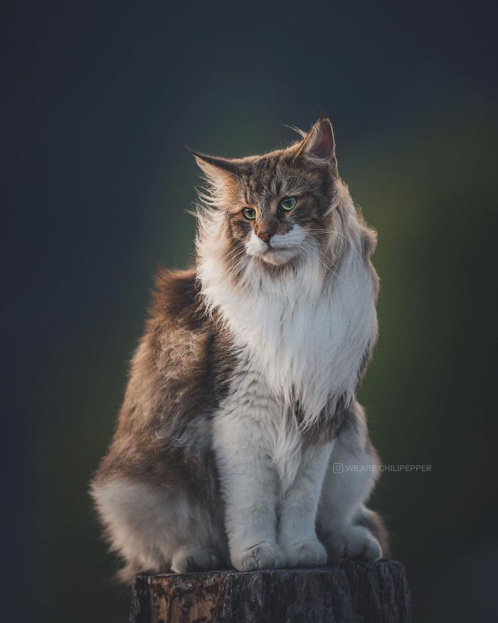 Easy Diy Cat Enclosure To Keep Your Indoor Cats Happy And Safe Outdoor Cat Enclosure Cat Enclosure Outdoor Cats