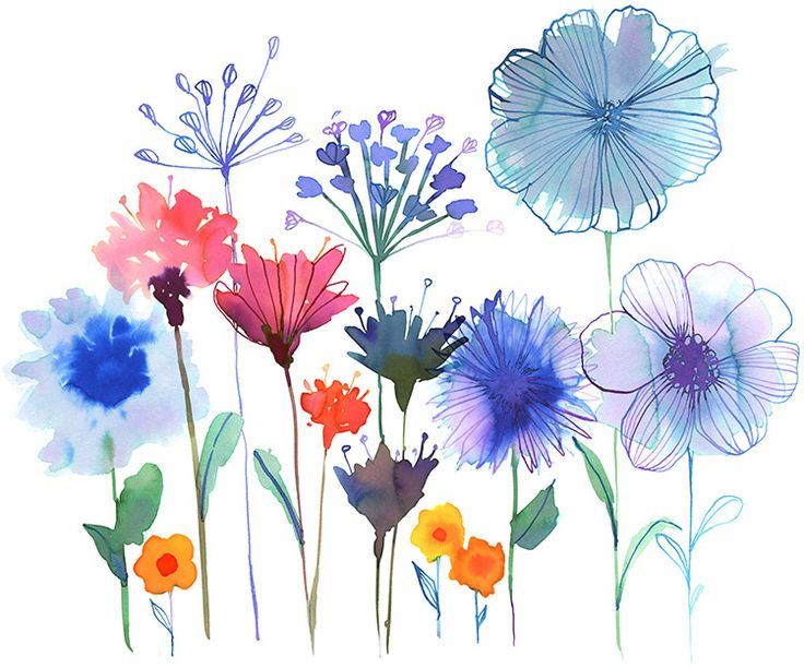 Garden Flower Art 371 best floral illustration images on pinterest | floral