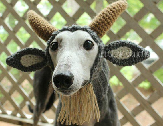 Goat Snood For Greyhounds Tierkostum Hund Hakeln Hunde