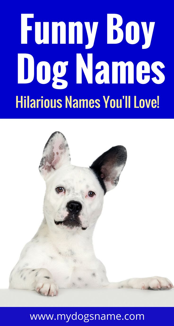 Funny boy dog names you have to check out when naming your new pup. These names are doggone hilarious!