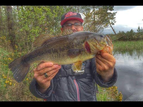 Pêche du Black Bass  Comment pêcher le black bass au vif en surface  Read more at http://peche-mania.e-monsite.com/pages/peche-du-black-bass.html#b8F0jdttVbr5grVr.99