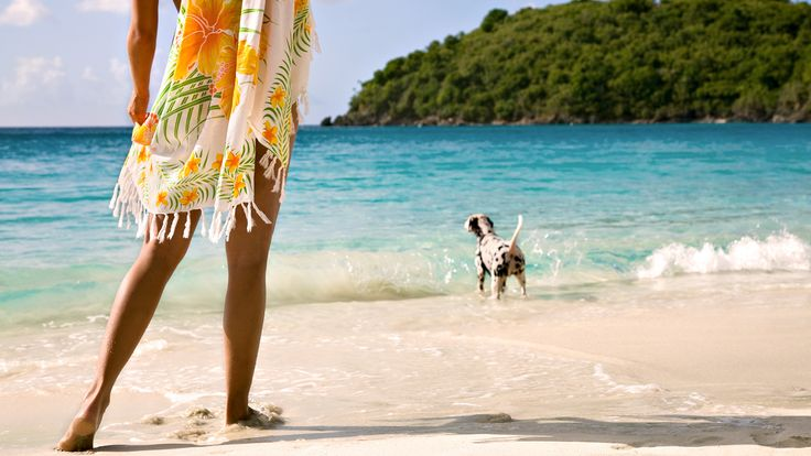 girl with dog at beach wallpaper