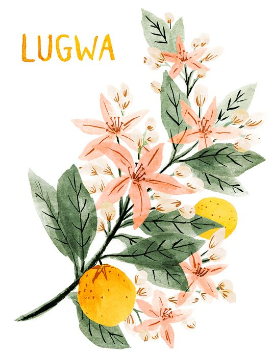 Flowers for Lugwa, one of the nearly 300 abducted Nigerian school girls. Please visitBlooms of Nigeria, a project that's meant to draw more attention to this issue. Curated by Rebecca Bradley and Janna Morton. More at Girl Rising.
