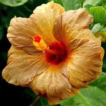 cinnamon flower - photo #24
